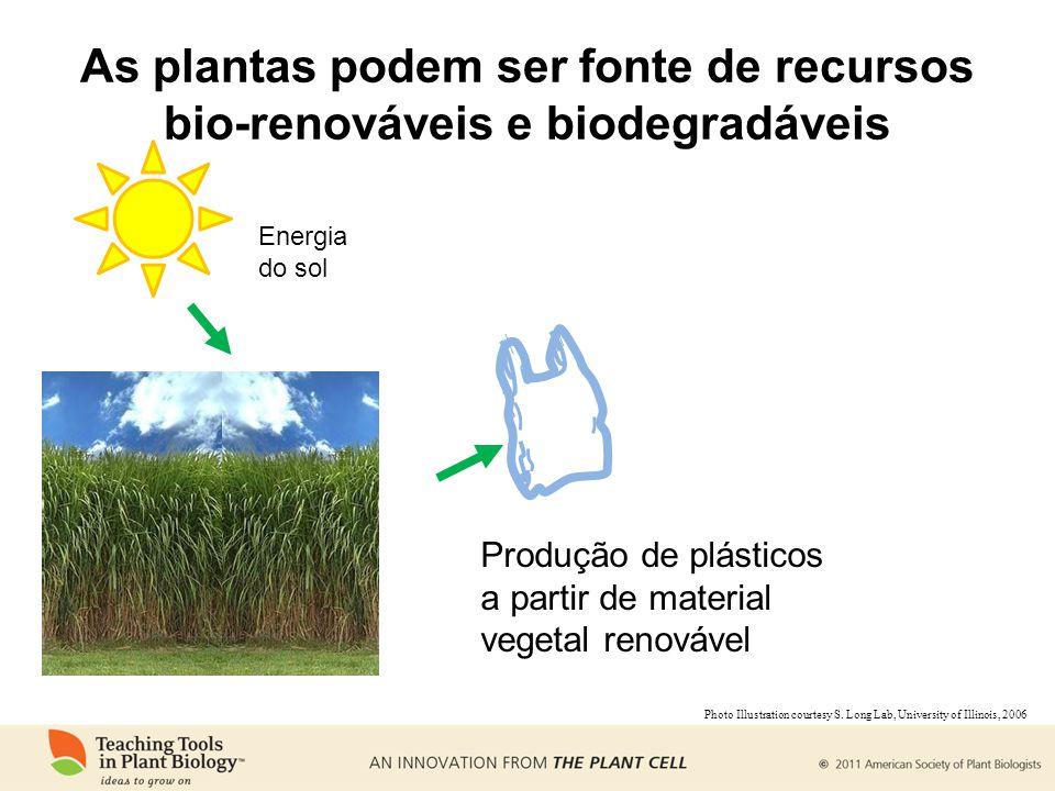As plantas podem ser fonte de recursos bio-renováveis e biodegradáveis
