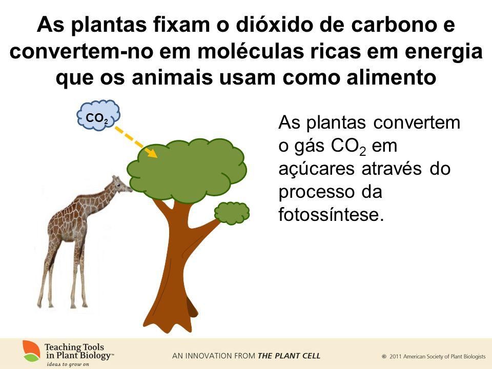 As plantas fixam o dióxido de carbono e convertem-no em moléculas ricas em energia que os animais usam como alimento