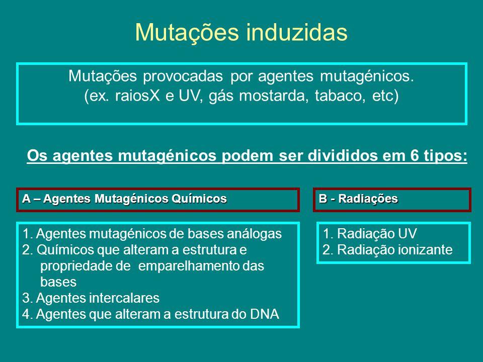 Os agentes mutagénicos podem ser divididos em 6 tipos: