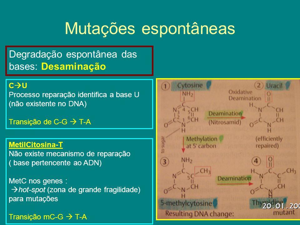 Mutações espontâneas Degradação espontânea das bases: Desaminação CU