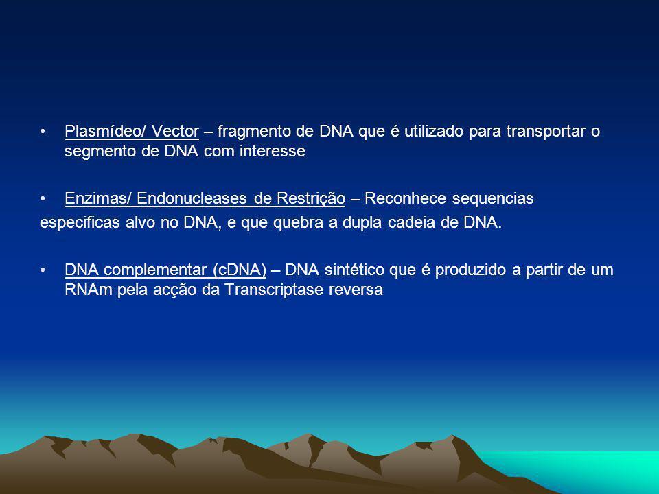 Plasmídeo/ Vector – fragmento de DNA que é utilizado para transportar o segmento de DNA com interesse