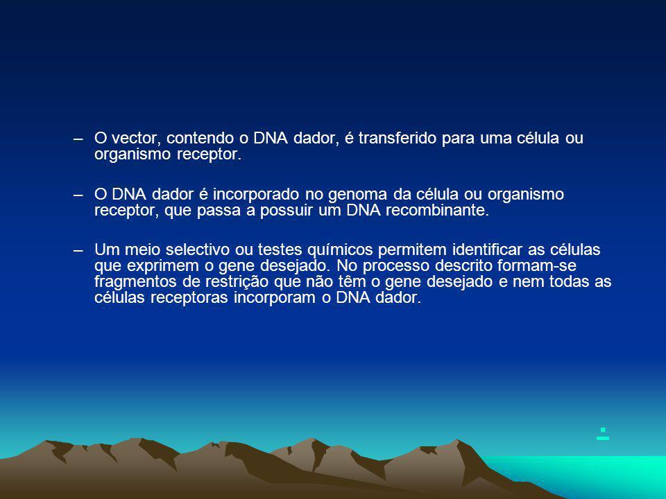 O vector, contendo o DNA dador, é transferido para uma célula ou organismo receptor.