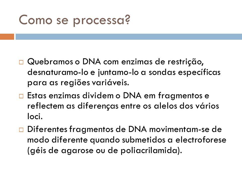 Como se processa Quebramos o DNA com enzimas de restrição, desnaturamo-lo e juntamo-lo a sondas específicas para as regiões variáveis.