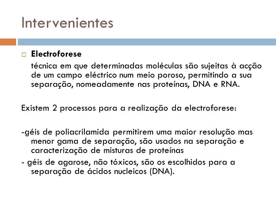 Intervenientes Electroforese