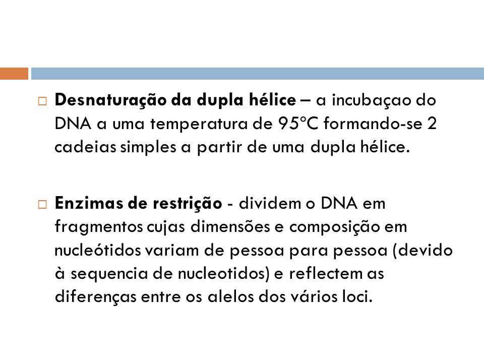 Desnaturação da dupla hélice – a incubaçao do DNA a uma temperatura de 95ºC formando-se 2 cadeias simples a partir de uma dupla hélice.