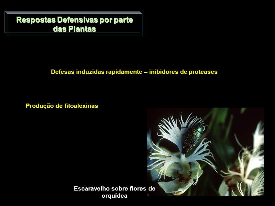 Respostas Defensivas por parte das Plantas