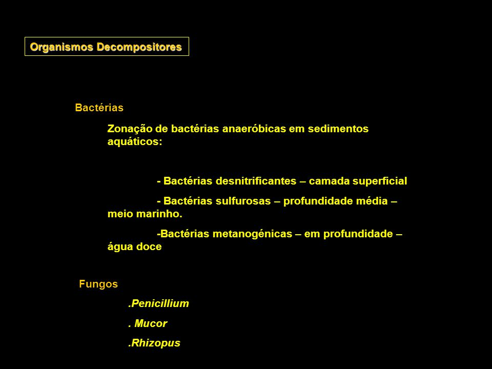 Organismos Decompositores
