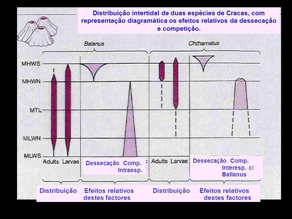 Distribuição Efeitos relativos Distribuição Efeitos relativos