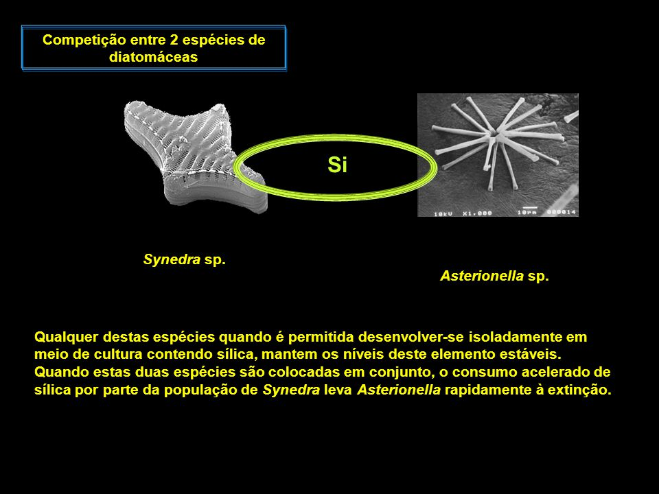 Competição entre 2 espécies de diatomáceas