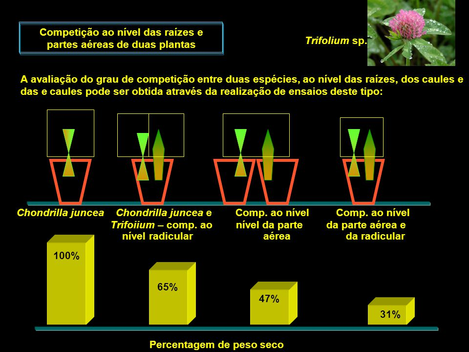 Competição ao nível das raízes e partes aéreas de duas plantas