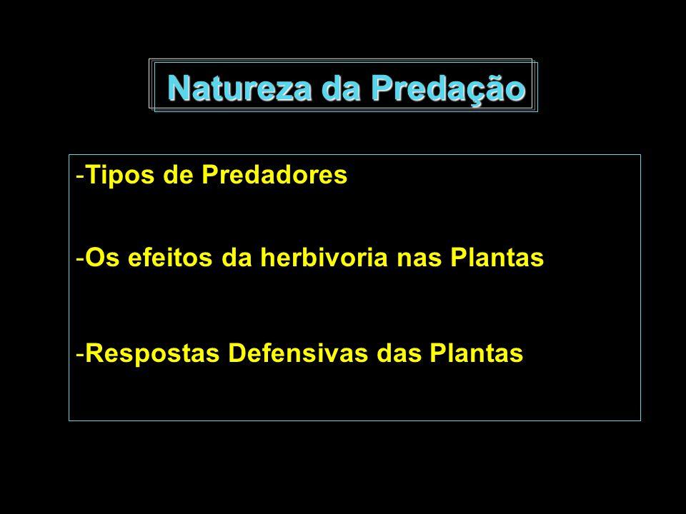 Natureza da Predação Tipos de Predadores
