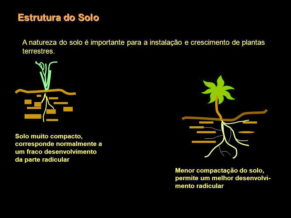 Estrutura do Solo A natureza do solo é importante para a instalação e crescimento de plantas terrestres.