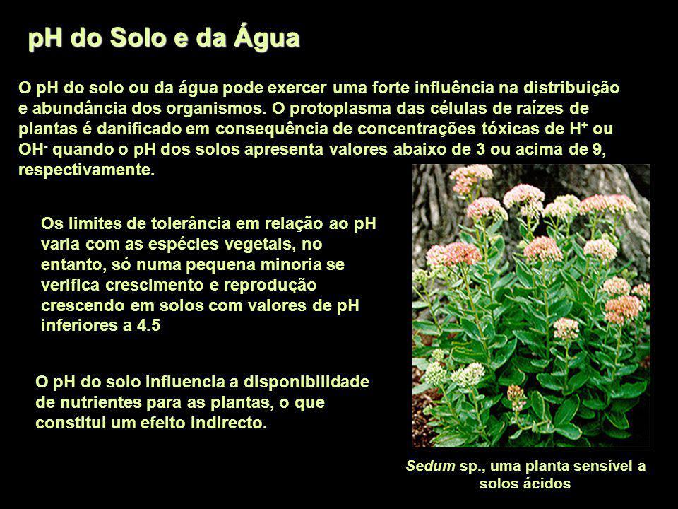 Sedum sp., uma planta sensível a solos ácidos