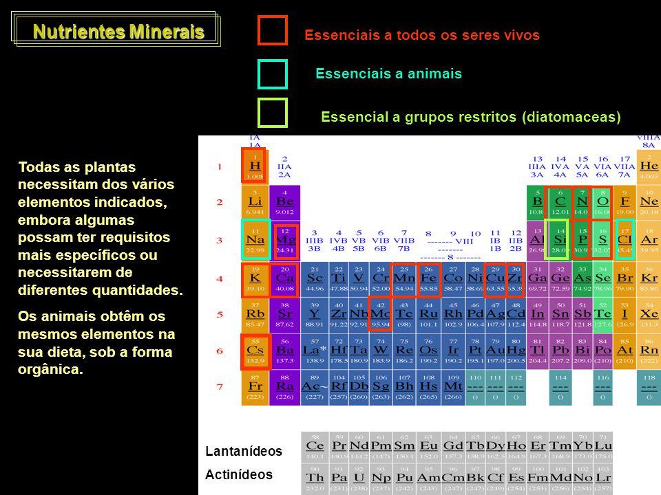 Nutrientes Minerais Essenciais a todos os seres vivos