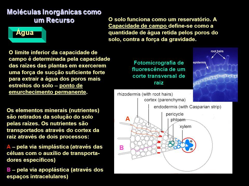 Moléculas Inorgânicas como um Recurso Água