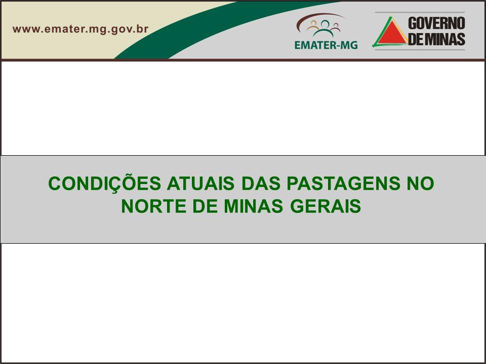 CONDIÇÕES ATUAIS DAS PASTAGENS NO NORTE DE MINAS GERAIS