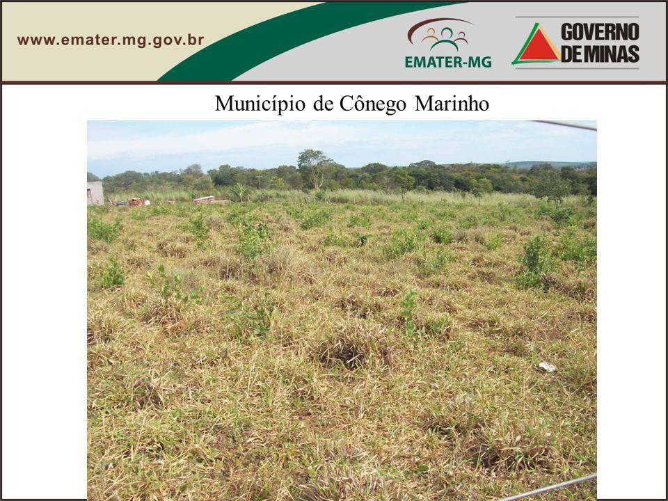 Município de Cônego Marinho
