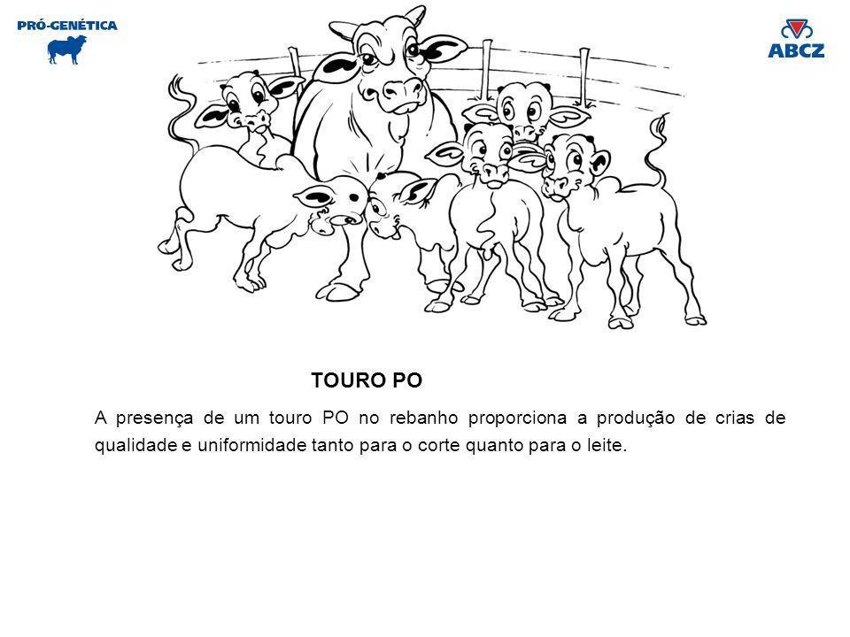 TOURO PO A presença de um touro PO no rebanho proporciona a produção de crias de qualidade e uniformidade tanto para o corte quanto para o leite.