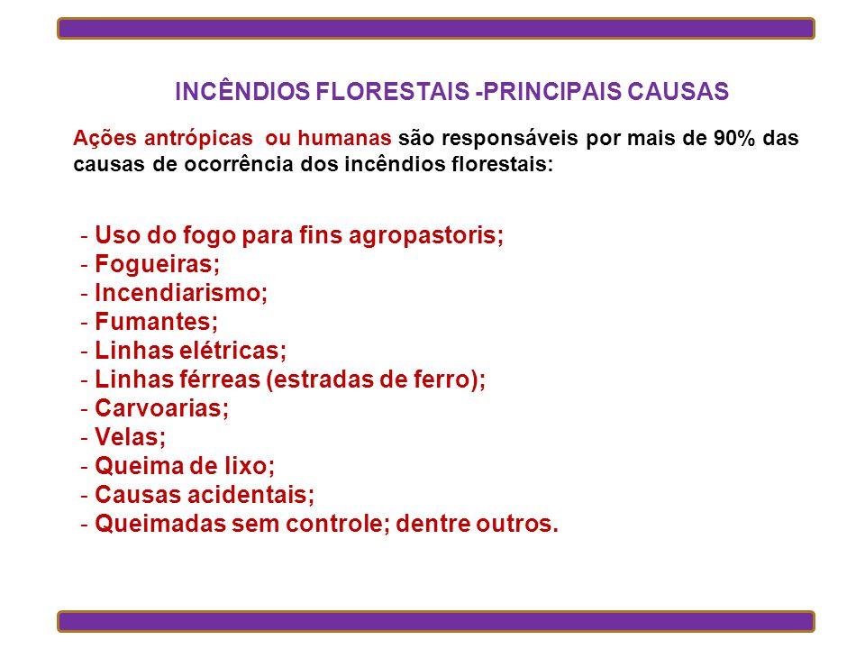 INCÊNDIOS FLORESTAIS -PRINCIPAIS CAUSAS