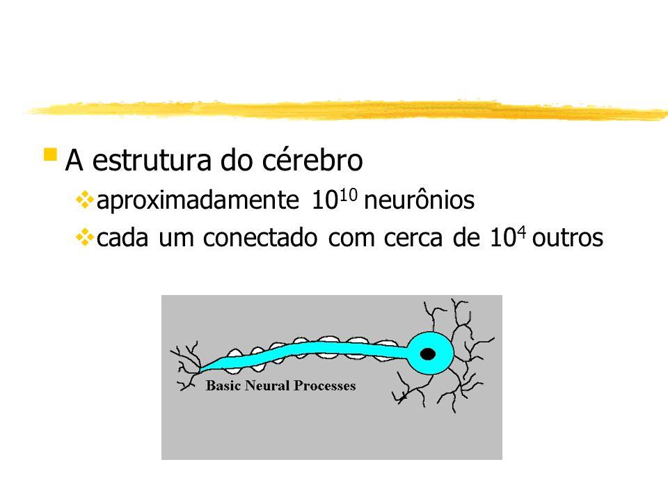 A estrutura do cérebro aproximadamente 1010 neurônios