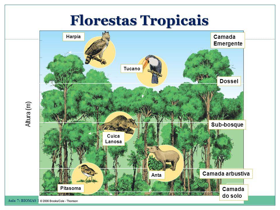 Florestas Tropicais Altura (m) Camada Emergente Dossel Sub-bosque