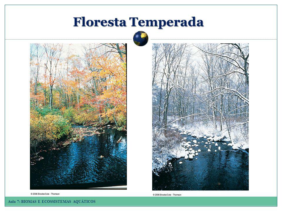 Floresta Temperada 1.