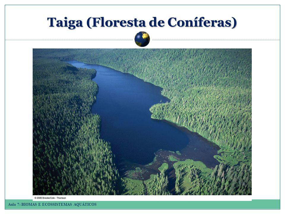 Taiga (Floresta de Coníferas)