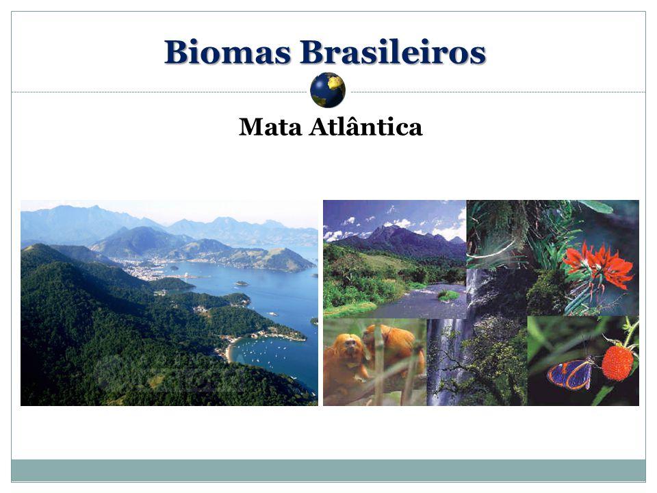 Biomas Brasileiros Mata Atlântica 59