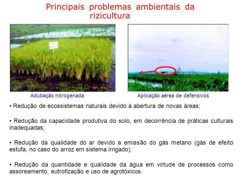 Principais problemas ambientais da rizicultura