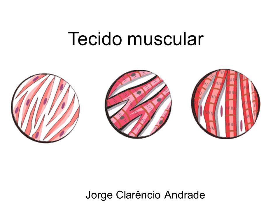 Tecido muscular Jorge Clarêncio Andrade