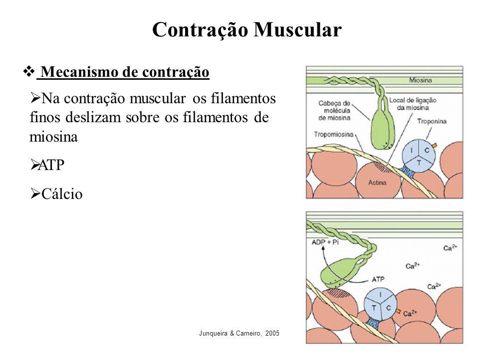 Contração Muscular Mecanismo de contração