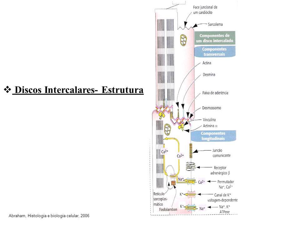 Discos Intercalares- Estrutura