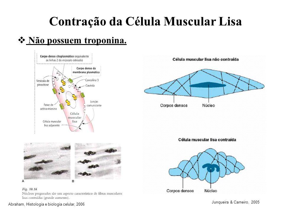 Contração da Célula Muscular Lisa