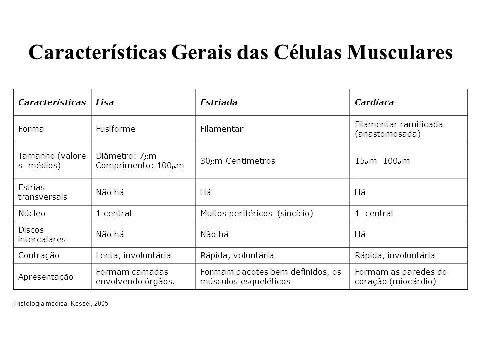 Características Gerais das Células Musculares