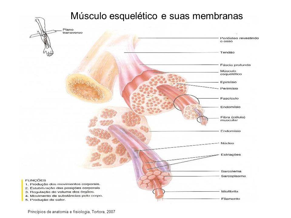 Músculo esquelético e suas membranas