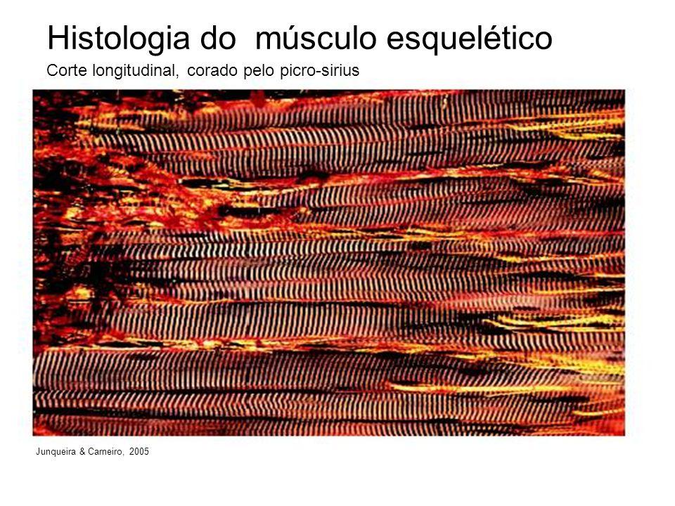 Histologia do músculo esquelético