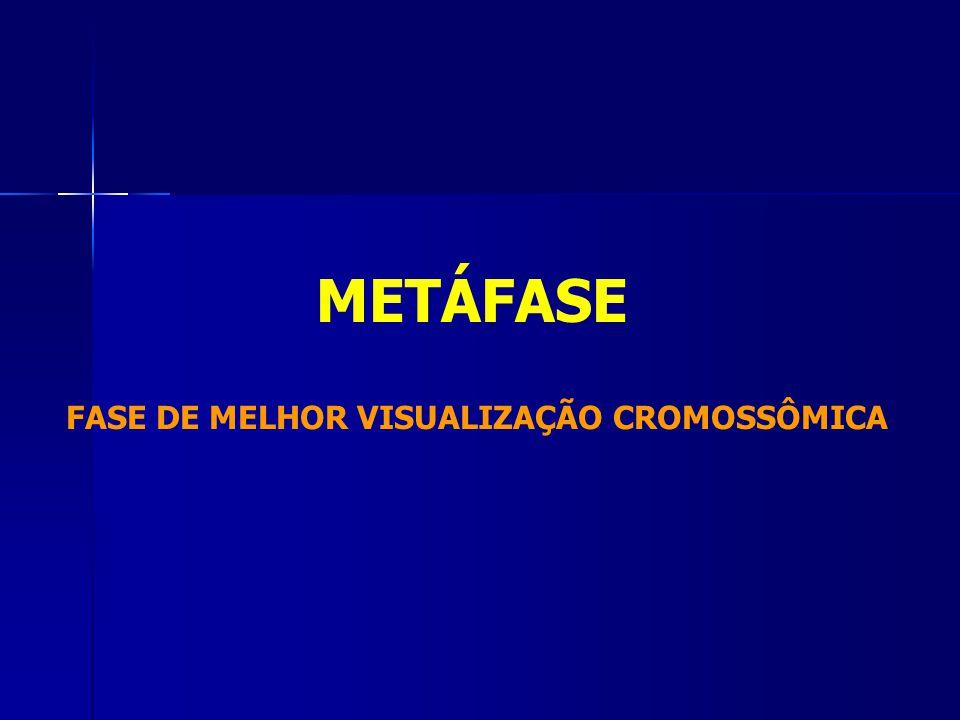 FASE DE MELHOR VISUALIZAÇÃO CROMOSSÔMICA