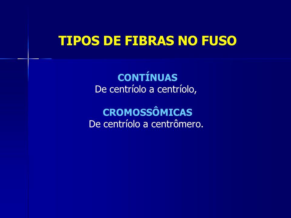 TIPOS DE FIBRAS NO FUSO CONTÍNUAS De centríolo a centríolo,