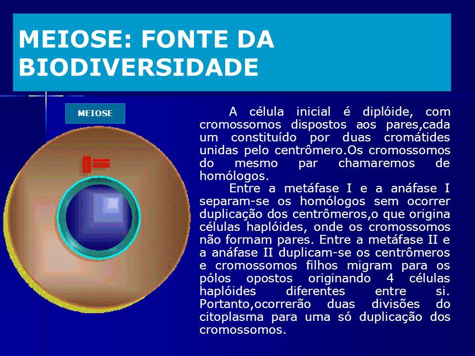 MEIOSE: FONTE DA BIODIVERSIDADE