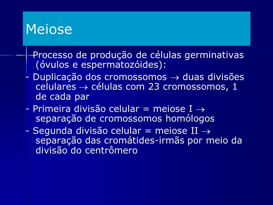 Meiose - Processo de produção de células germinativas (óvulos e espermatozóides):