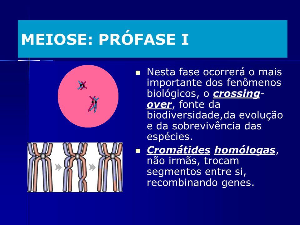 MEIOSE: PRÓFASE I