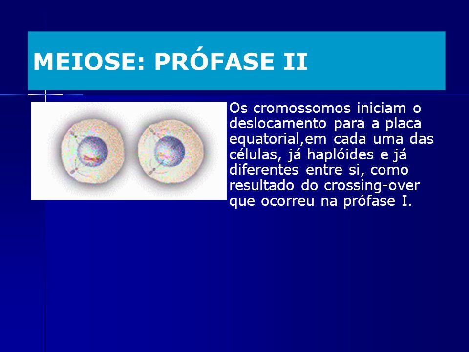 MEIOSE: PRÓFASE II