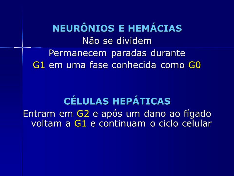 NEURÔNIOS E HEMÁCIAS CÉLULAS HEPÁTICAS