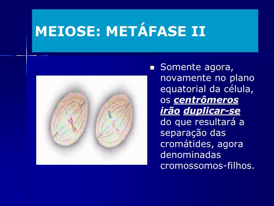 MEIOSE: METÁFASE II