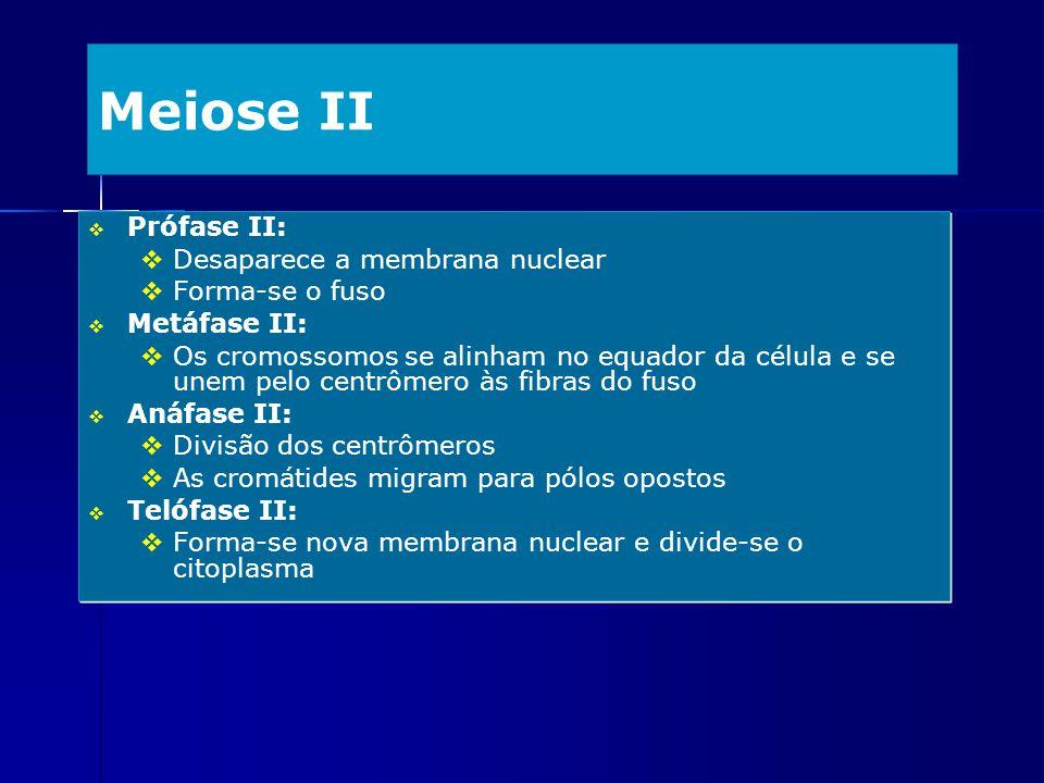 Meiose II Prófase II: Desaparece a membrana nuclear Forma-se o fuso