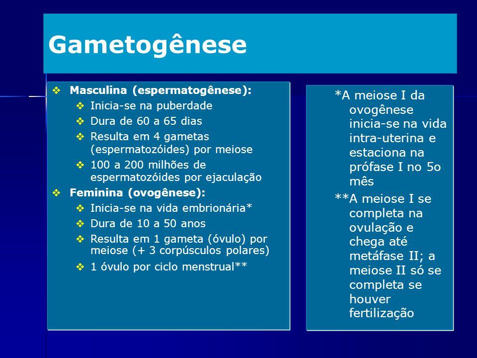 Gametogênese Masculina (espermatogênese): Inicia-se na puberdade. Dura de 60 a 65 dias. Resulta em 4 gametas (espermatozóides) por meiose.