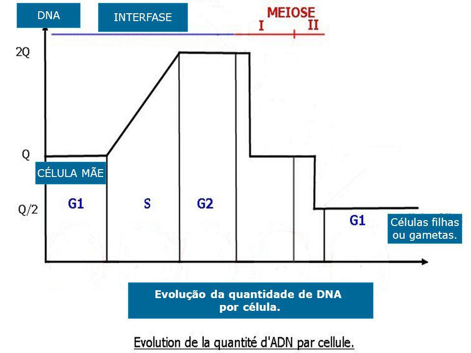 Evolução da quantidade de DNA