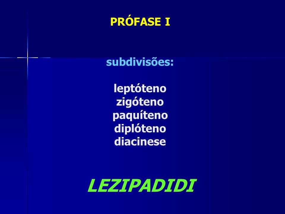 PRÓFASE I subdivisões: leptóteno zigóteno paquíteno diplóteno diacinese LEZIPADIDI