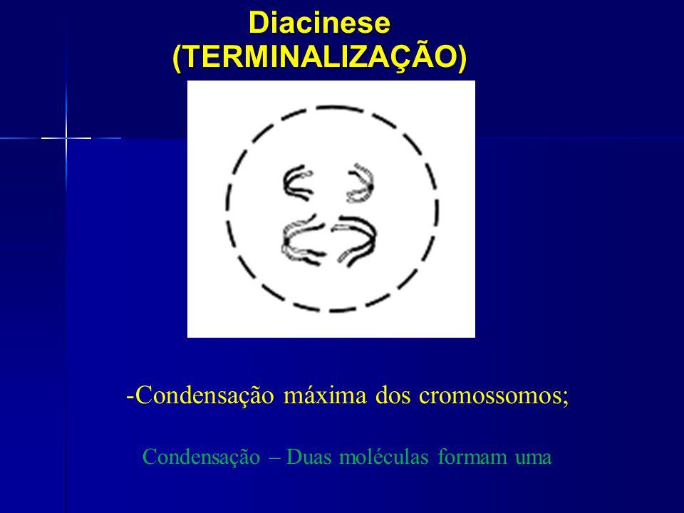 Diacinese (TERMINALIZAÇÃO)