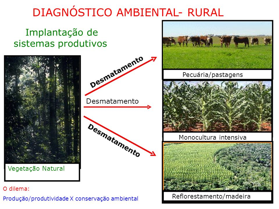 DIAGNÓSTICO AMBIENTAL- RURAL